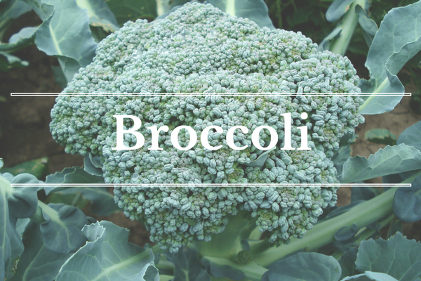 What's in Season: January - Broccoli | BourbonandHoney.com