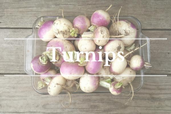 What's in Season: February - Turnip | BourbonandHoney.com